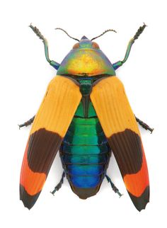 insects fine art abstract - Google Search