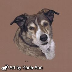 See how Buttons was painted in pastel by Karie-Ann Cooper. See collie dog portraits work in progress stages and how it was created.