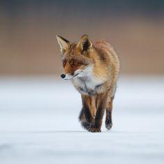 On slippery grounds... by Pim Leijen on 500px