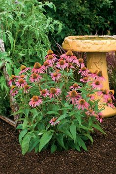 Coneflowers - 10 Flowers That Thrive in Full Sun - Southernliving. These Southern natives thrive in heat and humidity. They bloom best in full sun but can tolerate a little afternoon shade. Coneflowers can be drought-tolerant, but should be watered regularly in their first season. The wildflowers attract birds, bees, and butterflies and make excellent cut flowers.