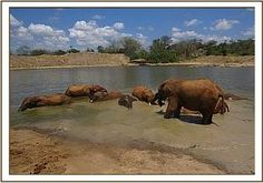 A BEAUTIFUL DAY FOR THE ORPHANS : Wallowing time!