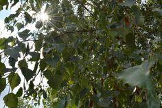 Frankfurt sun streaming in the trees