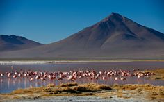Things not to miss - #01 Parque Nacional Madidi  Covering nearly nineteen thousand square kilometres, this park is home to some of the most diverse plant and animal life in South America.      #02 Salar de Uyuni  A vast, perfectly flat expanse of dazzling …