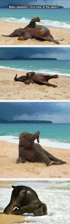 Enjoy The Sand Little Guy. OMG Cuteness Overload, especially last pic...