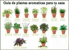 Guia de #plantas aromaticas para tu casa