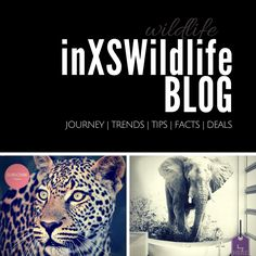 We've started a blog to share all the incredible wildlife experiences with you, our readers. Just like our name says it, we've been so fortunate and blessed to have wildlife sightings and photo opportunities in excess (inXS Wildlife). Be sure to subscribe to our newsletter so you never miss out on all the great stories, photos, videos, art and products we have to offer. #wildlifeblog #wildlife #wildlifephotography #inxswildlife #wildanimals Wildlife Photography Tips, African Safari, Great Stories, How To Start A Blog, Blessed, The Incredibles, Sayings, Videos, Photos