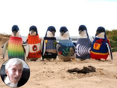Australia's Oldest Man Spends Free Time Knitting Tiny Sweaters for Injured Penguins http://www.peoplepets.com/people/pets/article/0,,20900740,00.html