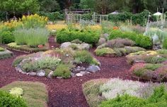A garden made from varieties of thyme.