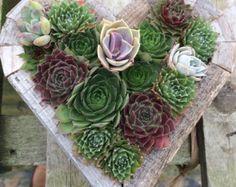 Handmade Heart Living Picture Frame Wooden Framed Vertical Garden Planter - Great Gift for Holiday