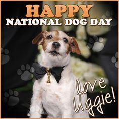 Happy #NationalDogDay!  Love, Uggie  #TheArtist #Uggie #DogDay #doglovers #movies #love #animals #pets