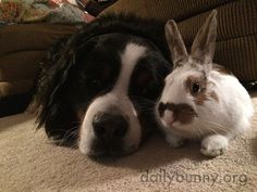 Bunny and the dog enjoy a little cuddle time - May 1, 2015
