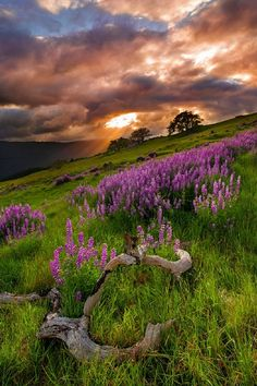 Hillside beauty Scotland