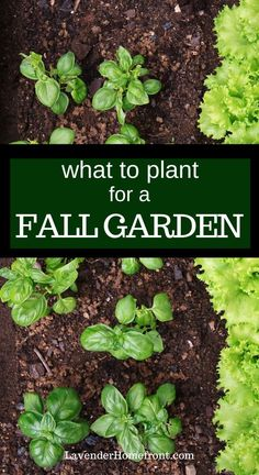 Learn what vegetables to plant in summer that can be harvested in fall! It's not too late to grow a vegetable garden this year. #gardeningtips #vegetablegarden #fall #summer #gardenideas Autumn Garden, Summer Garden, Garden Ideas For Fall, Gardening For Beginners, Gardening Tips, Gardening Quotes, Flower Gardening, Vegetable Garden Design, Vegetable Garden In Containers