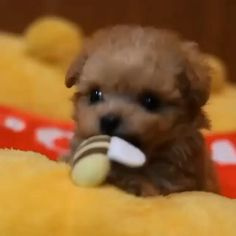 Cute Baby Dogs, Super Cute Puppies, Baby Animals Super Cute, Cute Funny Dogs, Cute Little Puppies, Cute Little Animals, Cute Dogs And Puppies, Cute Funny Animals, Mutt Puppies