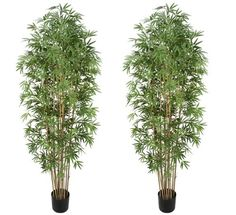TWO Pre-potted 7' Artificial Bamboo Trees with Real Bamboo Trunks * To view further for this item, visit the image link.