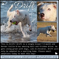 Drift needs a sporting home! Email today!