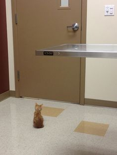 Facing the vet head on - Pets Who Are Dealing With The Vet The Very Best They Can
