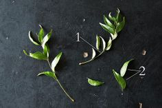 Everything you need to know about fresh curry leaves: what they are, what they are not, and how to use them. Plus, exactly where you can buy curry leaves. Curry Leaf Plant, Curry Leaves, Spices And Herbs, Fresh Herbs, Spice Blends, Spice Mixes, Relish Recipes, Curry Spices, No Salt Recipes