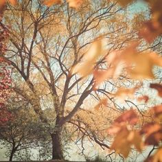 Treetop autumn leaves in orange   autumn/fall . Herbst . automne   @ weheartit  