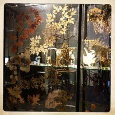 Naturalis museum, leiden