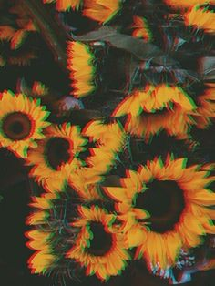 A playlist featuring Post Malone, Vince Staples, Lil Wayne, and others Retro Flowers, Vintage Flowers, Aesthetic Iphone Wallpaper, Aesthetic Wallpapers, Iphone Wallpaper Vintage Retro, Vintage Photography, Art Photography, Photography Flowers, Fashion Photography