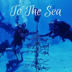 Underwater gardening! Find out how scuba divers visiting Bonaire can give back by volunteering with Coral Restoration Foundation Bonaire.