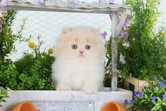 What a beautiful little kitten