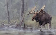Backwaters Moose Painting by L Beckstein Wildlife Paintings, Wildlife Art, Animal Paintings, Acrylic Paintings, Moose Pictures, Art Pictures, Photos, Bull Moose, Moose Art
