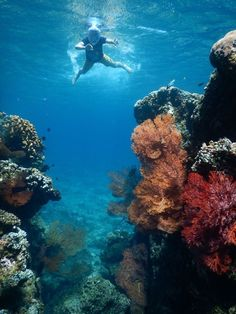 #snorkling #Amed #Bali picture from our guest Pippa Howard