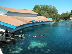 """Weeki Wachee.. see that building? there are seats down there. underwater theatre. we saw """"The Little Mermaid"""""""
