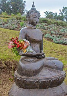 PLEASE GIVE ME YOUR VOTE! Online Contest - Buddha - Fine Art America