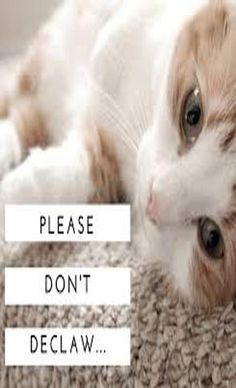 Nowadays, whether or not to declaw a cat is a pretty polarizing topic among cat lovers, and it can get heated Raising Kittens, Cats And Kittens, Kitty Cats, Crazy Cat Lady, Crazy Cats, Cat Toilet Training, Cat Shelves, New Puppy, Funny Cats