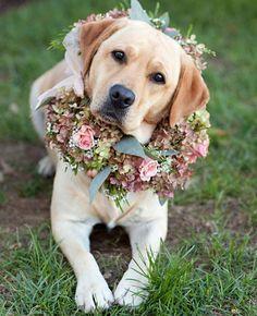 Labrador con ghirlanda