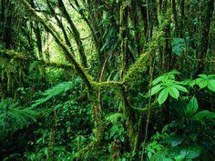 Selva Y Bosque Tropical Lluvioso