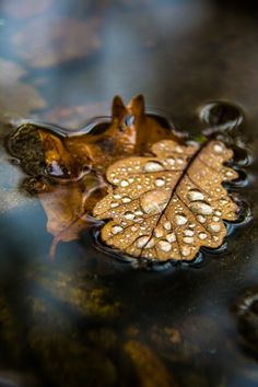 Autumn fall leaves water float droplets drops reflection