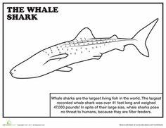 Shark Activity Sheet About Sharks Ocean Science