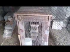 Φωλια για κλωσσα Νο2 - hens nest No2 - YouTube