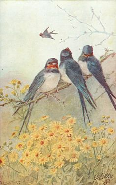 three swallows on branch over yellow daisies, one flying in distance
