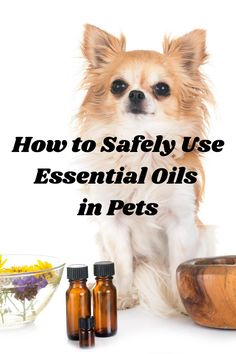 Essential oils and aromatherapy are big topics of interest right now. There is a lot of conflicting information on the internet about their uses in pets. I wanted to address this and provide some guidelines to follow. Click to read more about essential oils from holistic veterinarian, Dr. Deneen Fasano. #pawromatherapy #essentialoilsinpets #dogessentialoils #catessentialoils #holisticvet #petblog Aromatherapy For Dogs, Are Essential Oils Safe, Dog Nutrition, Oils For Dogs, Pet Shampoo, Healthy Pets, Pet Care Tips, Pet Health, Animals And Pets