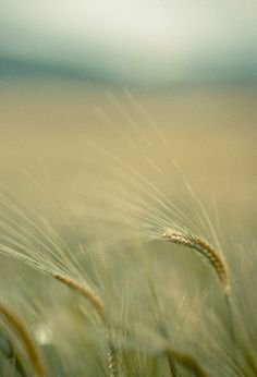 Blur... #blur #surreal #bokeh #nature #green #depthoffield #shotoftheday #abstract #field #farm https://tworldstudio.co.uk
