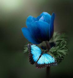 Wallpaper Nature Flowers, Flower Phone Wallpaper, Butterfly Wallpaper, Beautiful Bugs, Beautiful Butterflies, Beautiful Flowers, Beautiful Pictures, Butterfly Pictures, Butterfly Flowers