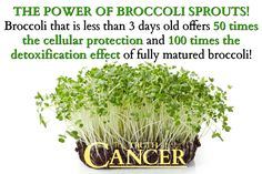 The power of broccoli sprouts! Broccoli that is less than 3 days old offers 50 times the cellular protection and 100 times the detoxification effect of fully matured broccoli! Please re-pin to share with your family & friends! Together we can educate the world! // The Truth About Cancer <3