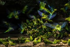 Winners of the 2018 Audubon Photography Awards