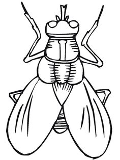 House Fly coloring pages Download Free House Fly coloring pages