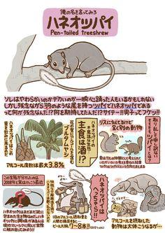 Tumblr: onibi-onibi: 動物つぶやきいきもの図鑑 ハネオツパイイラスト/高橋のぞむ [pixiv]