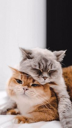Cute Little Kittens, Cute Baby Cats, Cute Cats And Dogs, Cute Little Animals, Kittens Cutest, Animals And Pets, Funny Animals, Cute Animal Photos, Funny Animal Pictures
