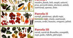Schemă de asolament, pe 3 ani, pentru grădina de legume | Paradis Verde