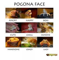 Pogona face