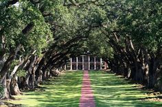 Oak Alley Plantation is famous for its double row of oak trees. Have you ever visited the plantation?