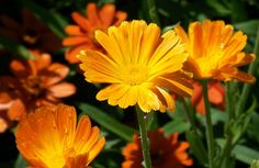 Lovely bright flowers!  A great post on words.